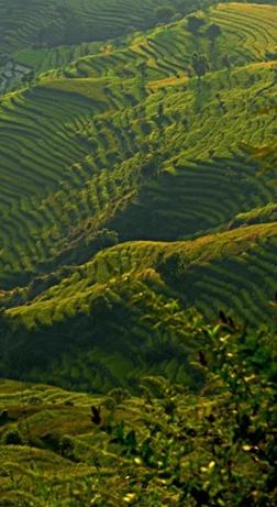 nepal_vert